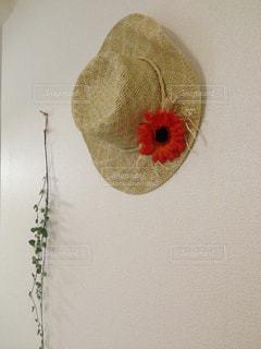 インテリア,夏,麦わら帽子,壁,観葉植物