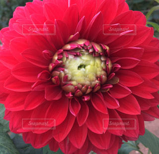 花の写真・画像素材[560814]