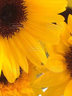 花の写真・画像素材[599110]