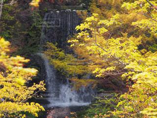 黄色の秋 - No.868968