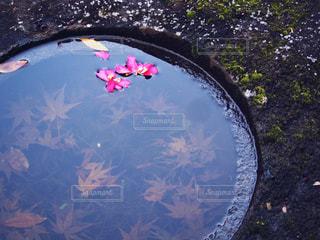 水の中の秋の写真・画像素材[870372]