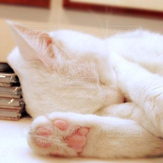 お昼寝中の猫の写真・画像素材[871064]