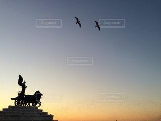 夕焼け空を飛んでいるカモメの写真・画像素材[968281]