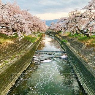 遠出しなくても地元で千本桜が楽しめるので毎年の楽しみです🌸の写真・画像素材[1124351]