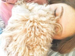 女性,犬,カメラ女子,屋内,モフモフ,トイプードル,お昼寝,happy,camera,犬と私,ワクワクする瞬間