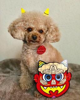 モデル,犬,屋内,かわいい,茶色,わんこ,座る,可愛い,子犬,プードル,鬼,愛犬,節分,豆まき,行事