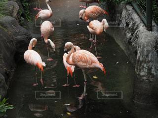 動物の写真・画像素材[702117]