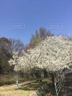 近くの木のアップの写真・画像素材[1103264]