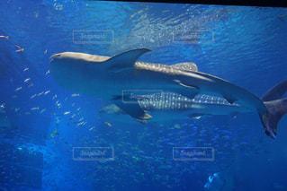 水族館,沖縄,旅行,美ら海水族館,ジンベイザメ