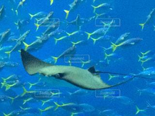 沖縄,旅行,美ら海水族館