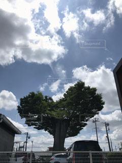 屋外,雲,青空,樹木,ハート