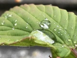 緑の葉の接写の写真・画像素材[2169597]