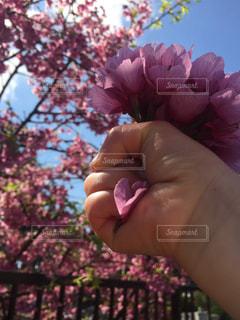 花を持っている手の写真・画像素材[1876655]