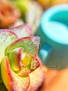 屋外,植物,水,水滴,昼,雫,ジョウロ,多肉植物