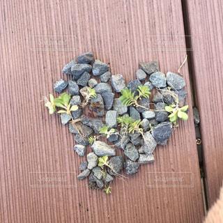屋外,植物,ハート,石,キュート