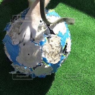 芝生の上の犬の地位の写真・画像素材[1508118]