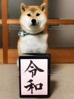 柴犬 犬 令和元年 令和の写真・画像素材[2100564]