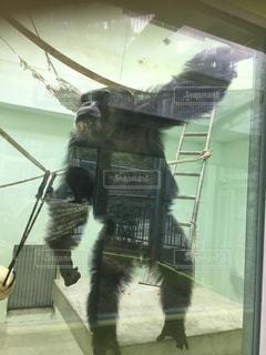 近くに猿のアップの写真・画像素材[1001585]