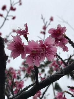 植物にピンクの花の写真・画像素材[1856603]