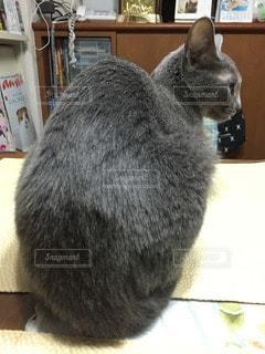 猫の写真・画像素材[16921]
