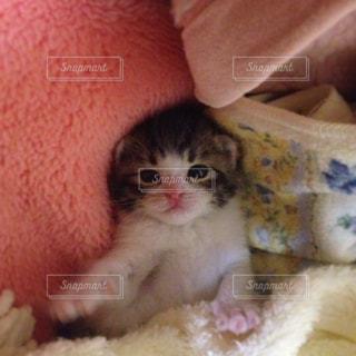 毛布の上に座っている猫の写真・画像素材[999579]