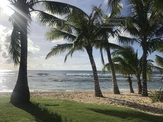海,ビーチ,綺麗,砂浜,アメリカ,ヤシの木,グアム,タモンビーチ