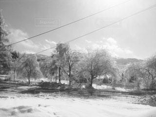雪に覆われた白樺 - No.815057