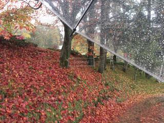近くに雨の日に傘のアップ - No.817119