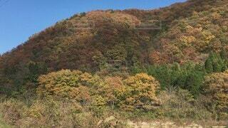 自然,風景,空,秋,紅葉,屋外,山,景色,草,樹木,里山,草木,故郷,針葉樹