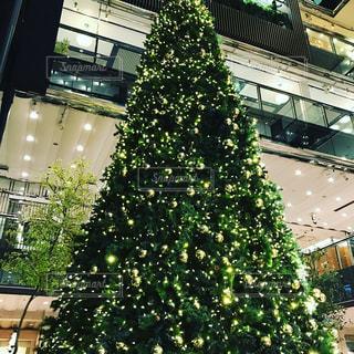 冬,光,イルミネーション,クリスマス,ツリー