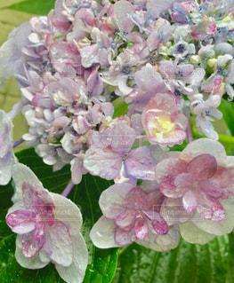 花の写真・画像素材[580595]