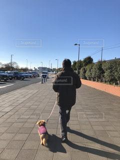 男性,犬,かわいい,散歩,男,50代