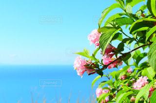 海と花の写真・画像素材[1131574]