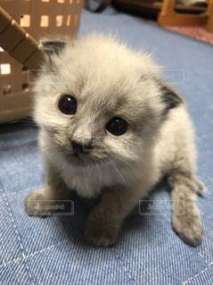 猫,動物,屋内,かわいい,ペット,子猫,人物,ネコ