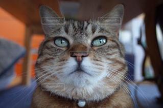 猫,動物,かわいい,ペット,人物,目,見つめる,ネコ