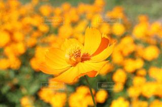 花の写真・画像素材[597288]