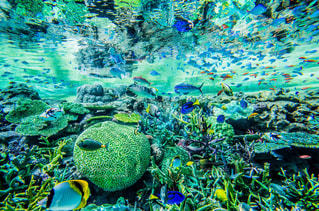 魚たちの楽園の写真・画像素材[772604]
