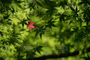 近くの緑の植物をの写真・画像素材[841342]