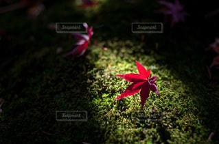 近くの花のアップ - No.841353