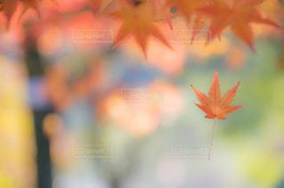 近くの花のアップの写真・画像素材[841356]
