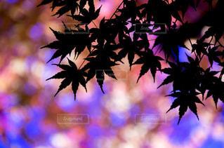 木の花の花瓶の写真・画像素材[841367]