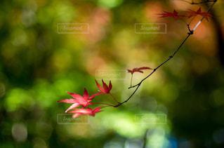 カラフルな鳥が木の枝に止まってください。 - No.868946
