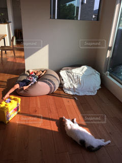 リビング 猫 子供 昼寝 無垢材