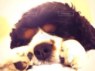 犬の写真・画像素材[11312]