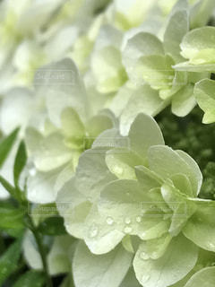 梅雨の写真・画像素材[572963]