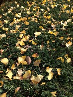 秋の写真・画像素材[619000]