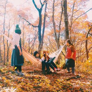 森の人々 のグループの写真・画像素材[849498]