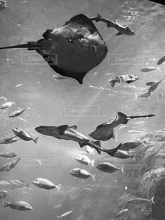 魚たちの写真・画像素材[829822]