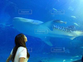 女性とジンベエザメの写真・画像素材[903936]