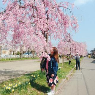 女性,空,花,春,桜,屋外,ピンク,青空,全身,樹木,草木,さくら,春コーデ